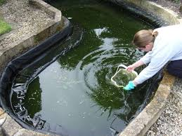 garden pond cleaning tips advice