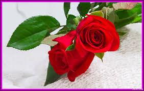 أجمل صور الورود والأزهار أروع الورود والأزهار الطبيعية باقة من