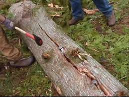 How To Split Cedar Logs For Rails Or Posts Tutorial Youtube