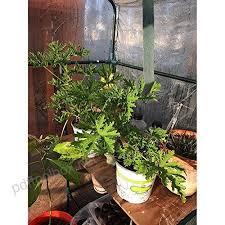 plant cover garden tent pvc green house