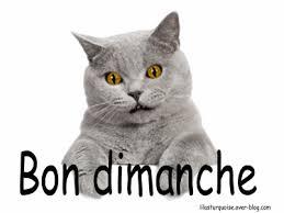"""Résultat de recherche d'images pour """"gif chat bon dimanche"""""""
