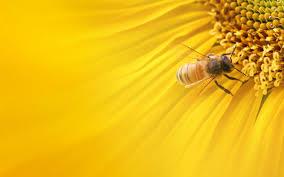 best 51 bee wallpaper on hipwallpaper