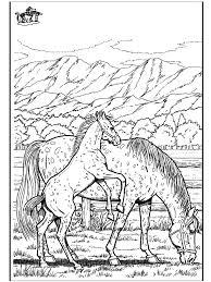Paard 6 Kleurplaten Paarden