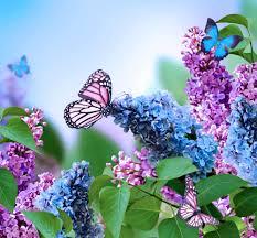 free photo blue flowers bloom bloom