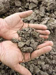 what is loam soil with pictures