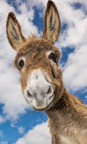 Image result for cute donkey