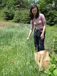 School of Plant Medicine Courses – Old Ways Herbal: Juliette Abigail Carr,  RH (AHG)