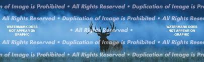 Elk In Fog Rear Window Graphic Custom Vinyl Graphics