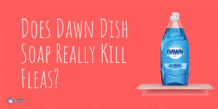 does dawn dish soap kill fleas how