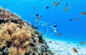 日本初、沖縄の海中が Google ストリートビューに登場!|ローカル ...