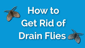 how to get rid of drain flies fast and