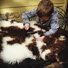 tanning sheepskins i would sleep on