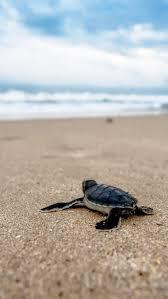 turtle beach apple iphone 6 plus 6s