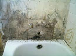 mold on bathroom walls marieroget com