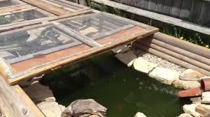 Keeping Turtles In The Pond Tropical Hobbies
