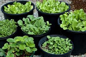 pot and container sizes for growing