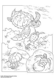 Sea Turtle Coloring Page Zeeschildpad Adult Coloring Book