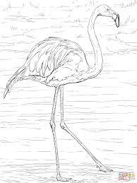Amerikaanse Of Caraibische Flamingo Kleurplaat Gratis