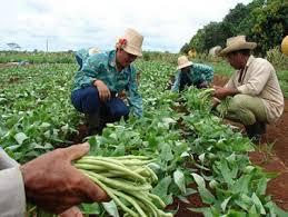 Productores camagüeyanos benefician áreas en usufructo