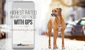 Best Wireless Dog Fence Gps Reviews Fast Dogs