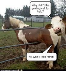 Cows With Puns Animal Comedy Animal Comedy Funny Animals Animal Gifs