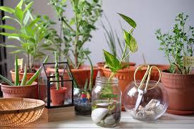 diy money plant in gl bottle jewelpie
