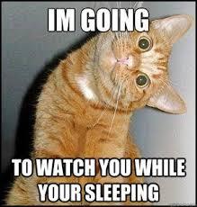 funny cat memes | Creepy cat meme | quickmeme | Creepy cat, Funny ...