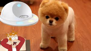 5 cool inventions for your dog 4