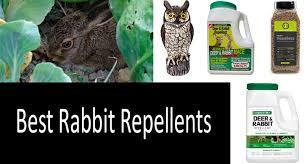 Top 10 Best Rabbit Repellents And Deterrents Expert Review 2020