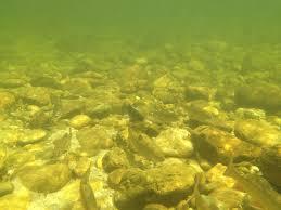 trout fishing near Sparta nc ...