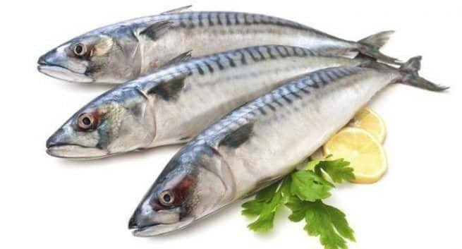 """Image result for Fatty Fish"""""""
