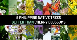 9 philippine native trees better than