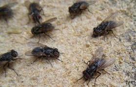 家里苍蝇太多,学会这招,苍蝇来一只灭一只,效果比苍蝇贴还好!