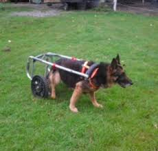 homemade dog wheelchair homemadetools net