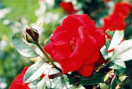 صور كبيره حلوه لقطات متنوعة Hd لخلفيات قمة في الروعة Flowers