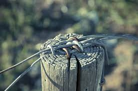 Free Images Water Nature Grass Branch Wing Barbed Wire Leaf Metal Wood Pile Security Braid Close Up Course Mess Wiring Macro Photography Fixing Demarcation Fence Post Outdoor Structure Wire Fencing Home