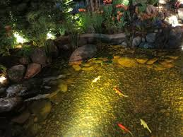 pond water with fish at canada blooms