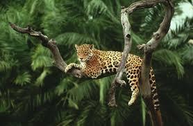 jaguar hd wallpapers top free jaguar