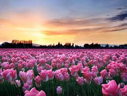 صور فصل الربيع اجمل خلفيات كمبيوتر وهواتف من فصل الربيع عيون