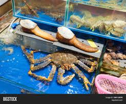 Geoduck Crab Fish Image & Photo (Free ...