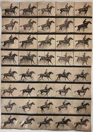 Eadweard Muybridge - Animal Locomotion
