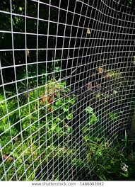 Metal Chicken Wire Mesh Fence Keeping Miscellaneous Stock Image 1486003082