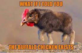 Buffalo Chicken - Imgflip