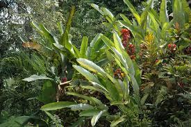 tropical garden plants 85654 tropical