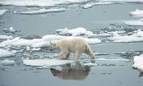 En tredjedel så många isbjörnar år 2050 - Sydsvenskan