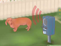 3 Ways To Keep Dogs Off Your Lawn Wikihow