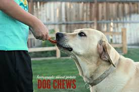 all natural homemade dog chews so easy