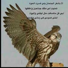 صور صقور مكتوب عليها يعتبر الصقور من الطيور الجارحه المميز
