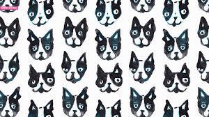 boston terrier wallpaper 55 pictures