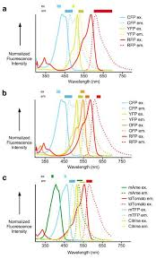 Multiplexed visualization of dynamic signaling networks using genetically  encoded fluorescent protein-based biosensors. - Abstract - Europe PMC